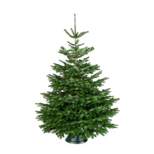 Kerstboom Nordmann A-kwaliteit 150-175cm gezaagd