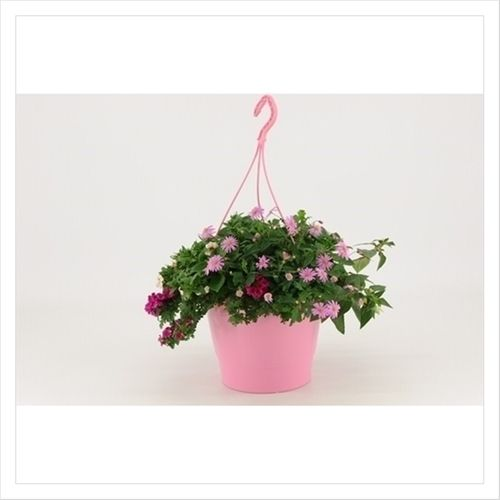 Blooming Joy XXL HP potmaat 27cm h 40cm