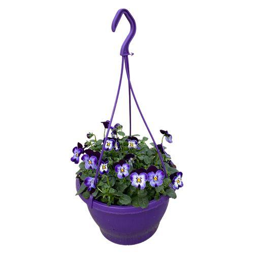 Buitenplant Viola Cornuta in hangpot paars