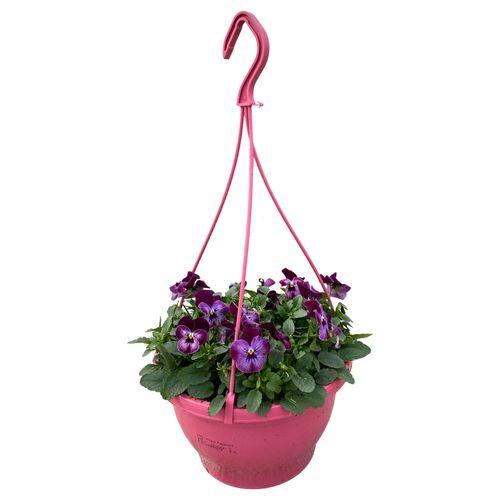 Buitenplant Viola Cornuta in hangpot roze