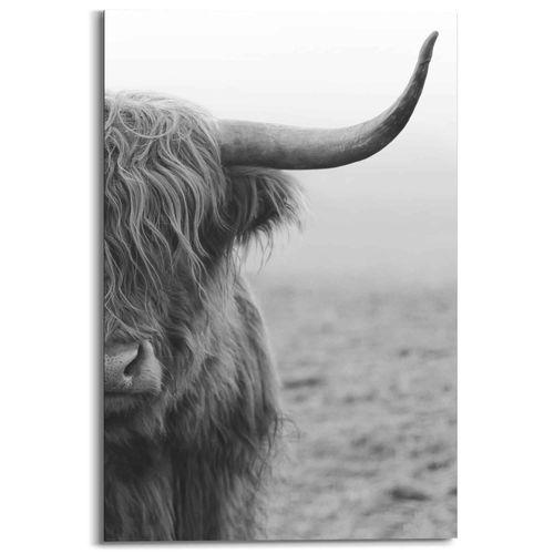 Schilderij Schotse Hooglander zwart-wit 60x90cm