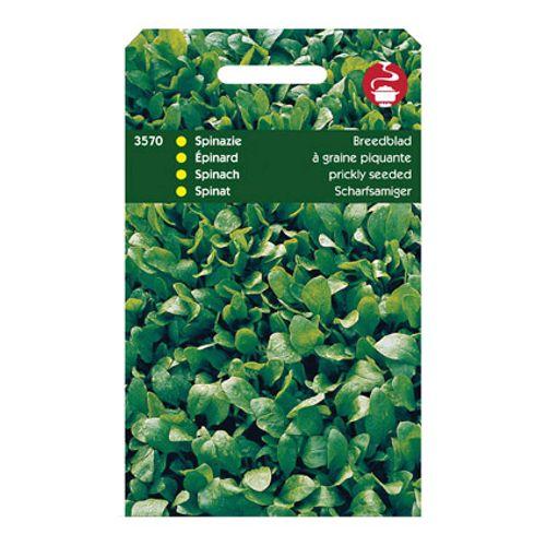 Zaden spinazie zomer breedblad