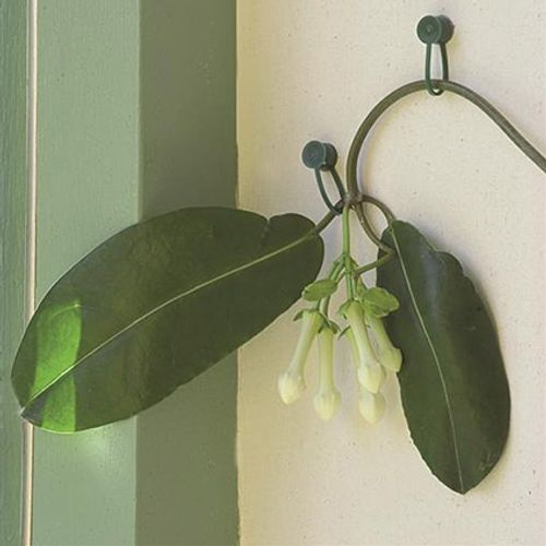 Attache plante Nature Ø 15 mm – 15 pcs