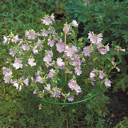 Tuteur plante Nature rond vert Ø 40 cm – 3 pcs