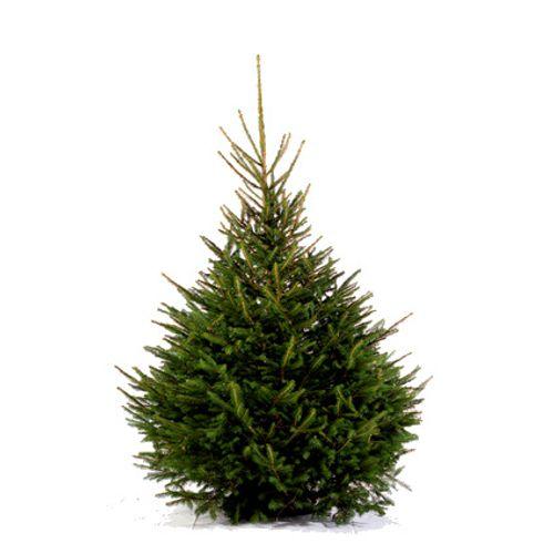 Central Park kerstboom Epicéa 125-150cm