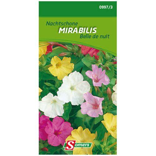 Belle de nuit Somers 'Mirabillis'
