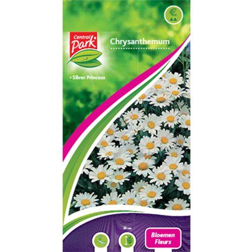 Sachet graines chrysanthemum Central Park 'Fleurs'