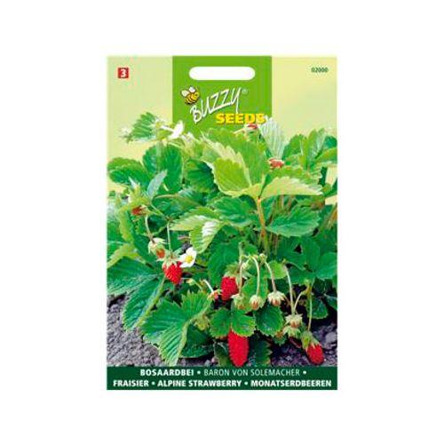 Buzzy seeds zaden aardbeien baron van solemacher