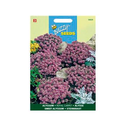 Buzzy seeds zaden alyssum royal carpet