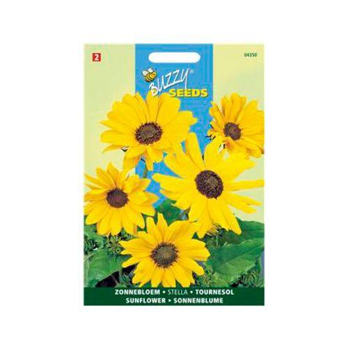 Buzzy seeds zaden miniatuurzonnebloem stella