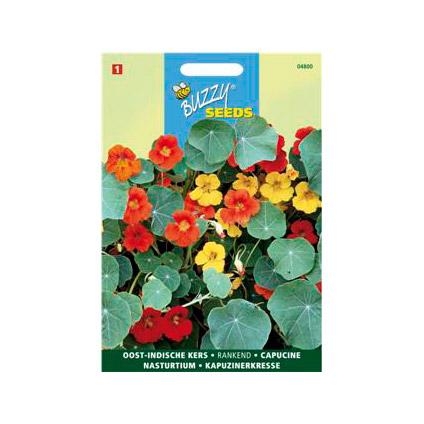 Buzzy seeds zaden oost-indische kers enkelbloemig