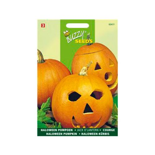 Buzzy seeds zaden halloween pompoen jack o'lantern