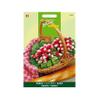 Buzzy seeds zaden radijs halflange rode groot witpunt