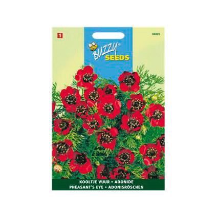 Buzzy seeds zaden adonis aestivalis