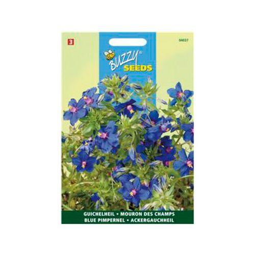 Buzzy seeds zaden guichelheil