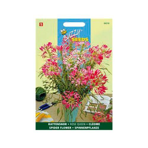 Buzzy seeds zaden kattensnor rose queen