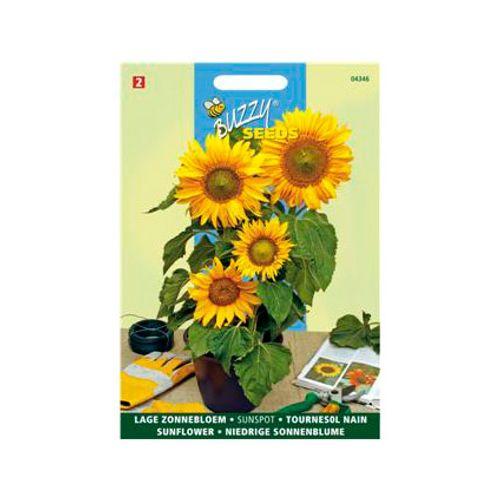 Buzzy seeds zaden zonnebloem dubbelbloemig laag
