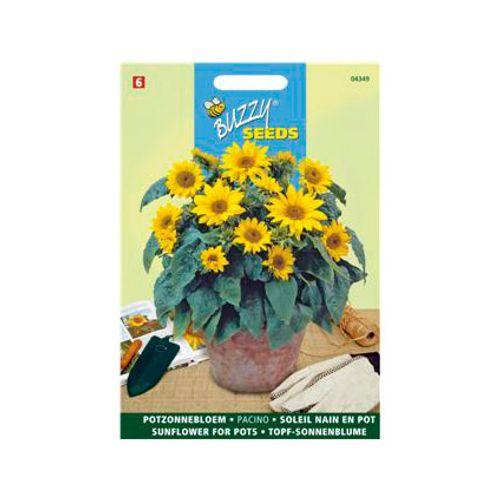 Buzzy seeds zaden zonnebloem pacino