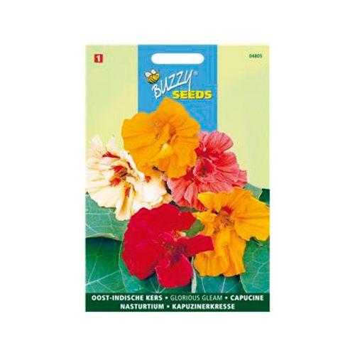Buzzy seeds zaden oost-indische kers glorious gleam