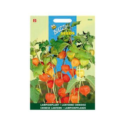Buzzy seeds zaden lampionplant