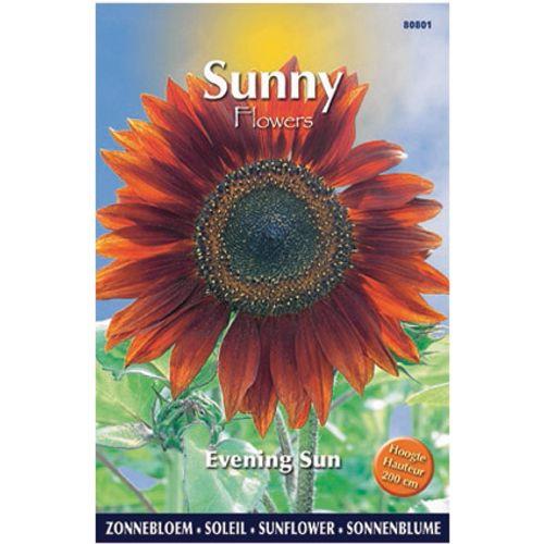 Sunny flowers zaden zonnebloem evening sun