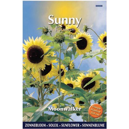 Sunny flowers zaden zonnebloem moonwalker