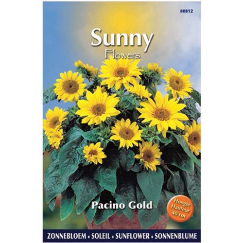 Sunny flowers zaden zonnebloem pacino gold