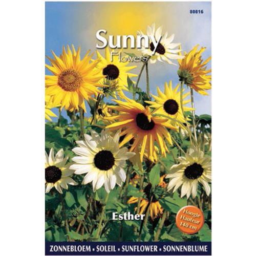 Sunny flowers zaden zonnebloem esther