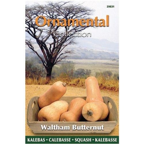 Ornamental collection zaden kalebas waltham butternut