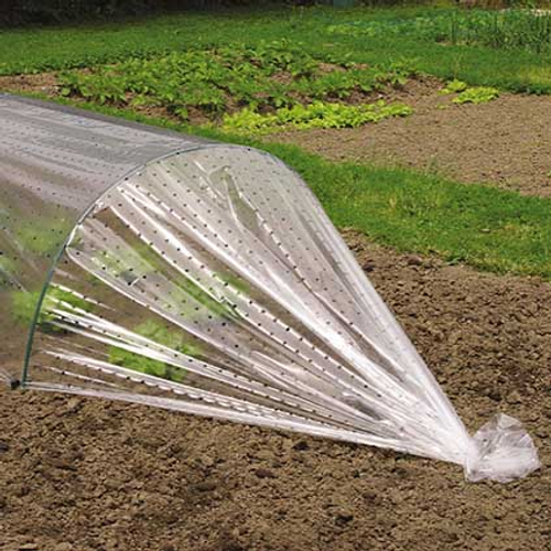 Film de forçage perforé Nature transparent 2 x 10 m