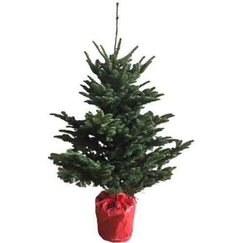 Central Park kerstboom Nobilis 125-150cm