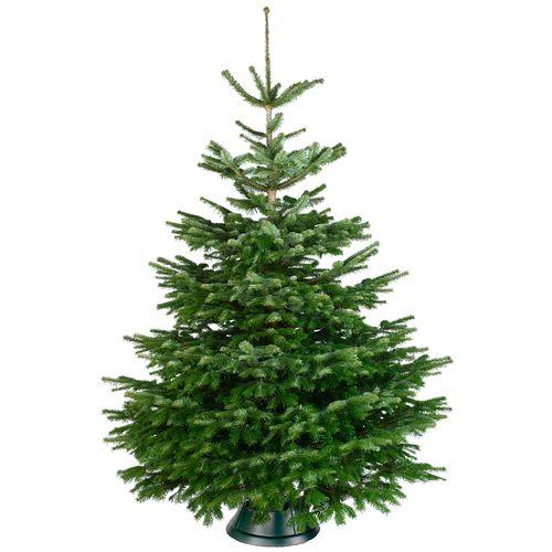 Kerstboom Nordmann A-kwaliteit 225-275cm gezaagd