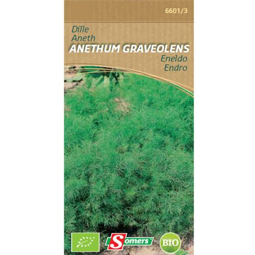 Sachet graines aneth Somers 'Anethum graveolens' endro