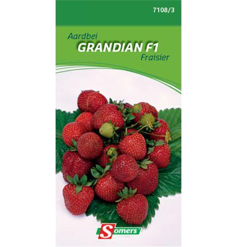 Sachet graines fraisier Somers 'Grandian F1'
