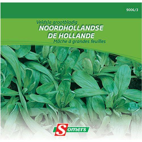 Sachet graines mâche Somers à grandes feuilles de hollande