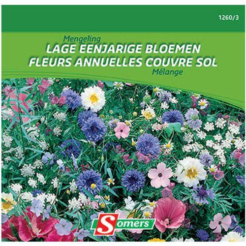 Mélange fleurs annuelles couvre sol Somers