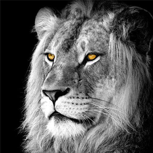 Glassart 'Lion' 30 x 30 cm