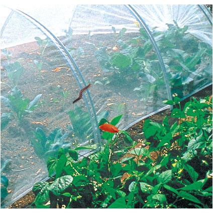 Filet anti-insectes Nortene 'Biocontrol' 10 x 2,2 m