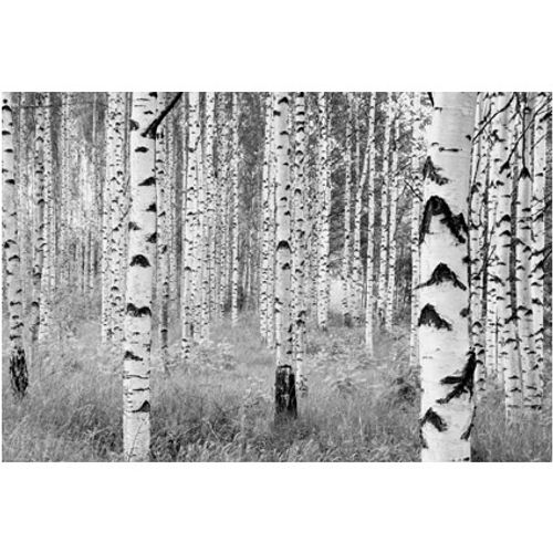 Papier peint photo 'Woods'