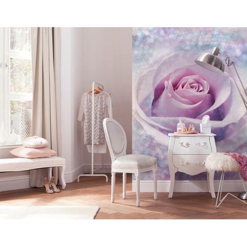 Papier peint photo 'Delicate rose'