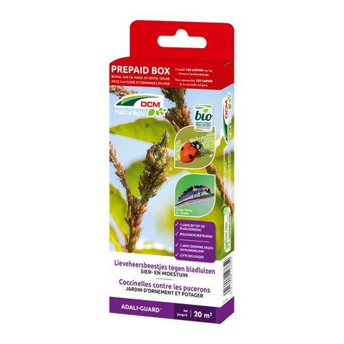 DCM Adali-Guard Lieveheersbeestjeslarven tegen bladluizen