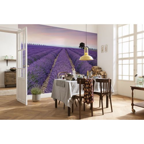 Photo murale Komar Provence