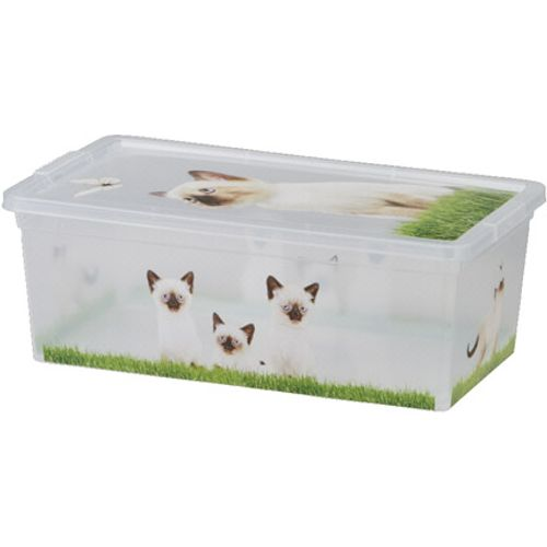 KIS Cbox kittens XS