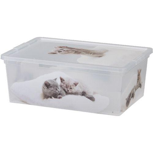 KIS Cbox kittens S