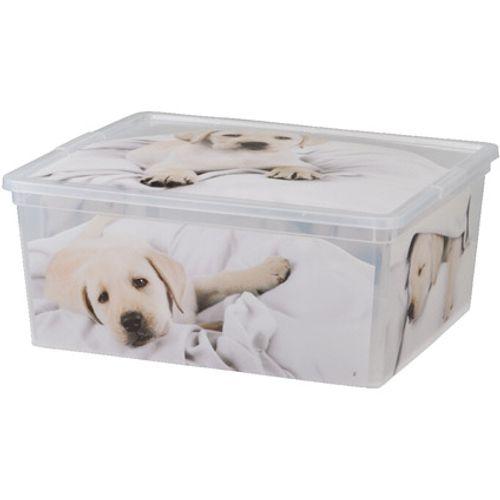 KIS Cbox puppy M