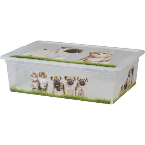 KIS Cbox puppies en kittens L