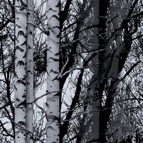 Transform premium statische glasfolie Forest 67,5x150cm