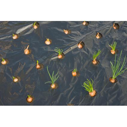 Film de paillage pour petits légumes Nature 5 x 0,95 m