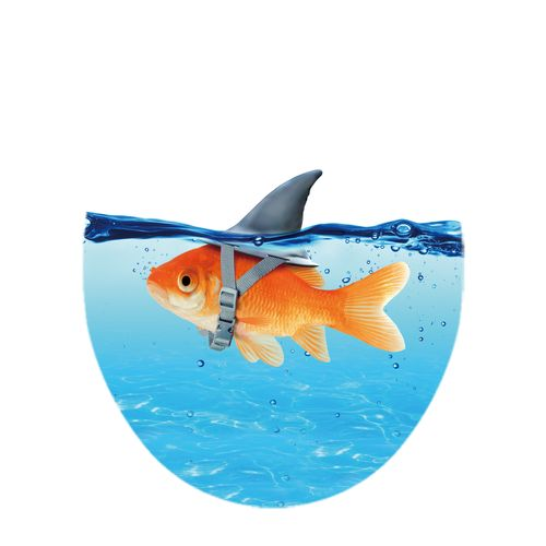AquaVive toiletzitting Vis/haai duroplast blauw