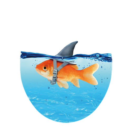 Abattant WC AquaVive Poisson / requin bleu Duroplast Softclose